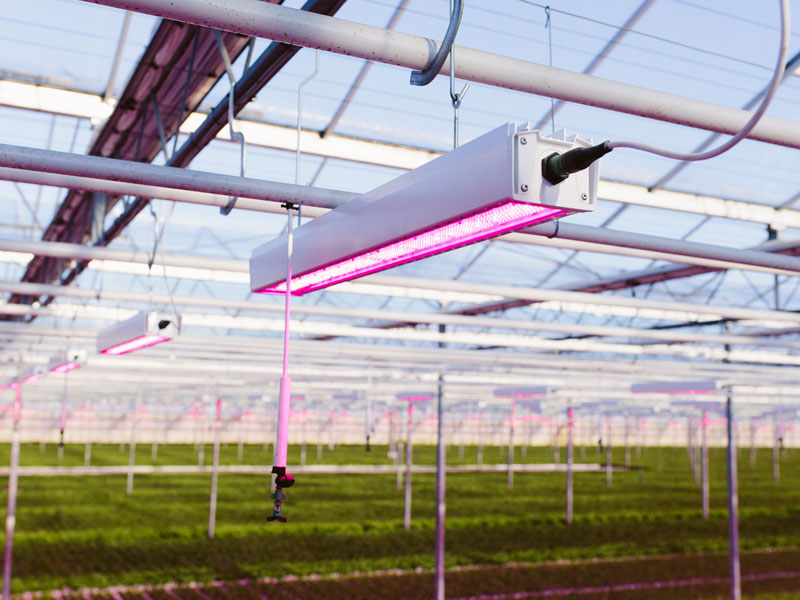 5 Selection Criteria for Design and Manufacturing of your Horticulture LED lamps